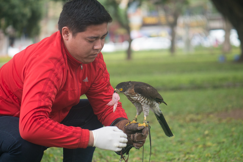 falconry (1 of 1)-7.jpg
