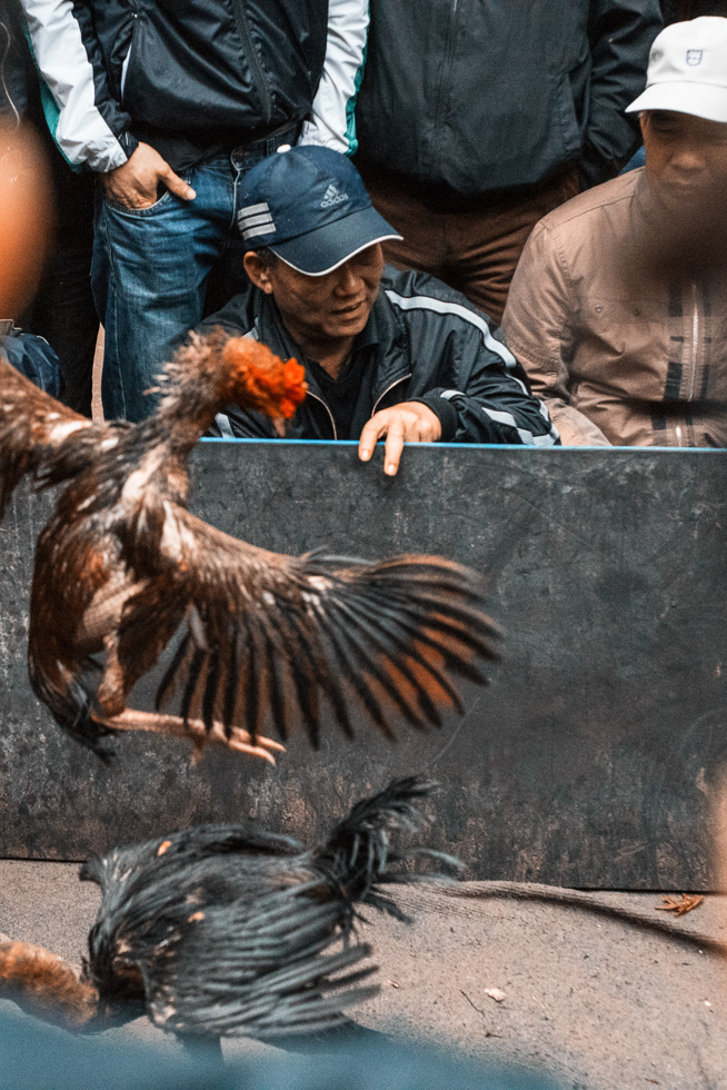 Rooster_Fight-13.jpg