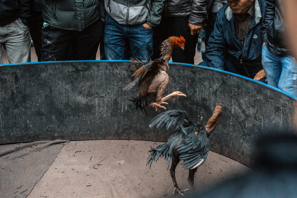 Rooster_Fight-14.jpg
