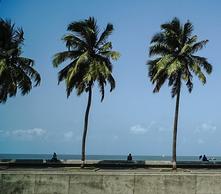 Three palms and at least three leisurely resting