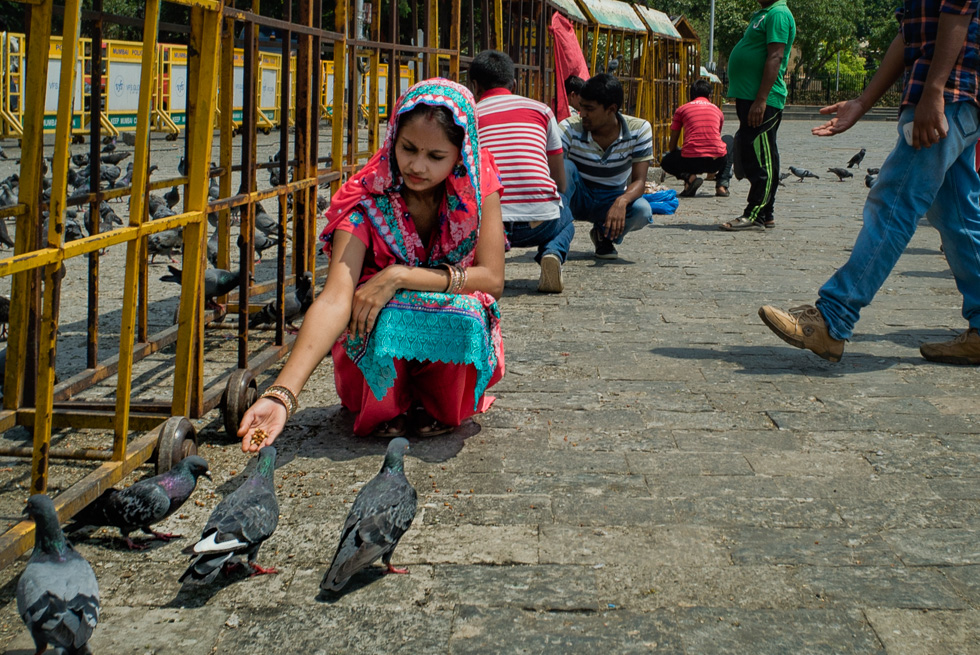 Indian Lady feeding the pigeons