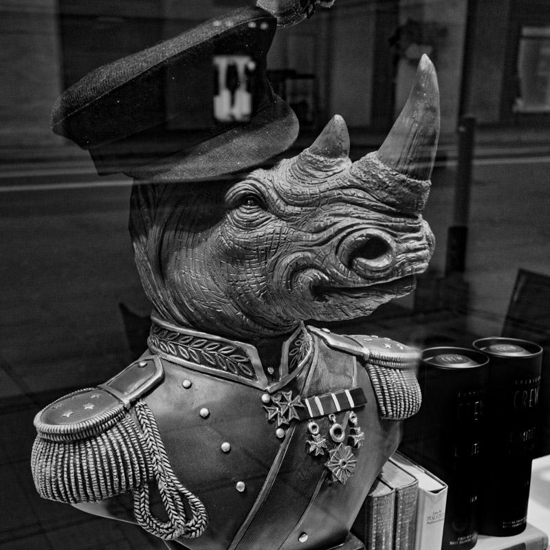 unseen rhino.jpg