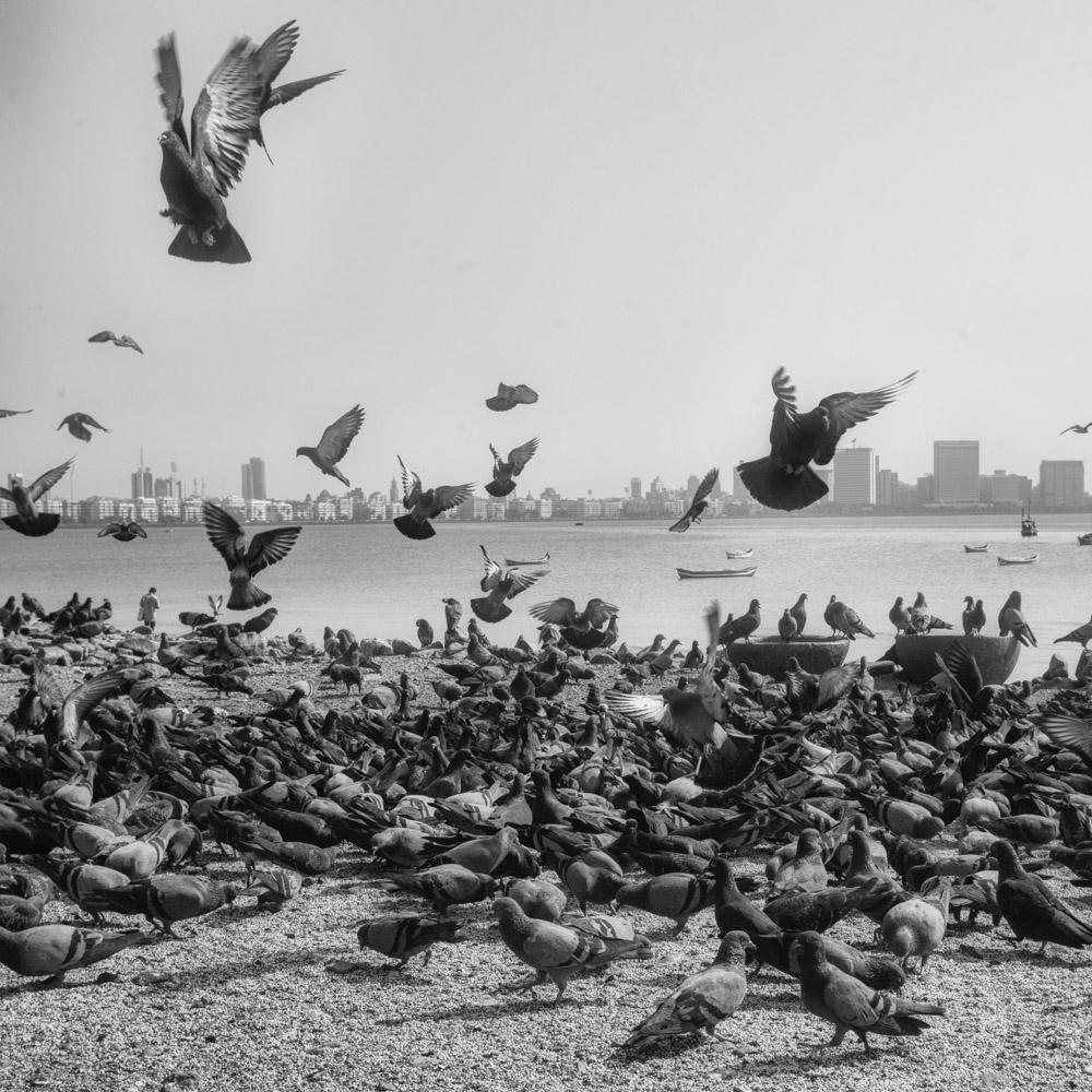 pigeon-2.jpg