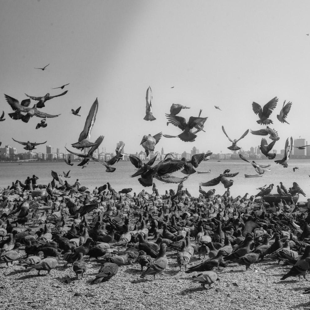 pigeon-5.jpg