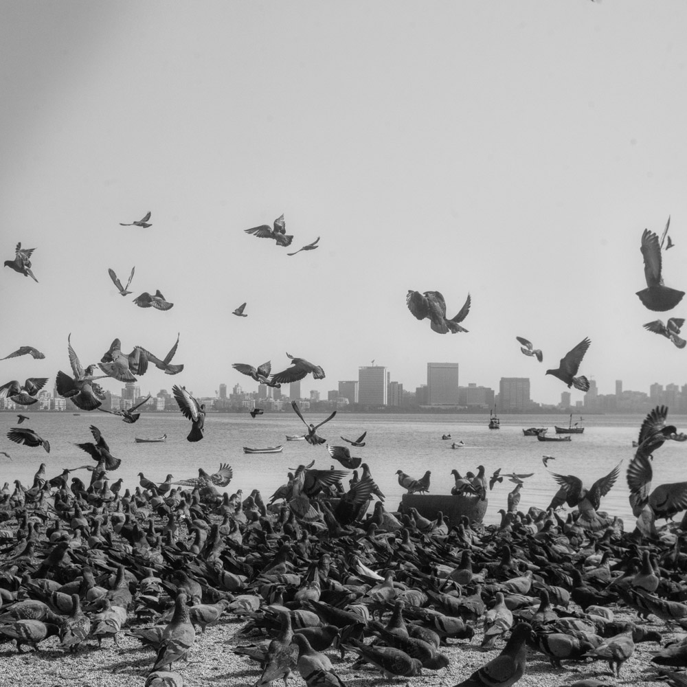 pigeon-7.jpg