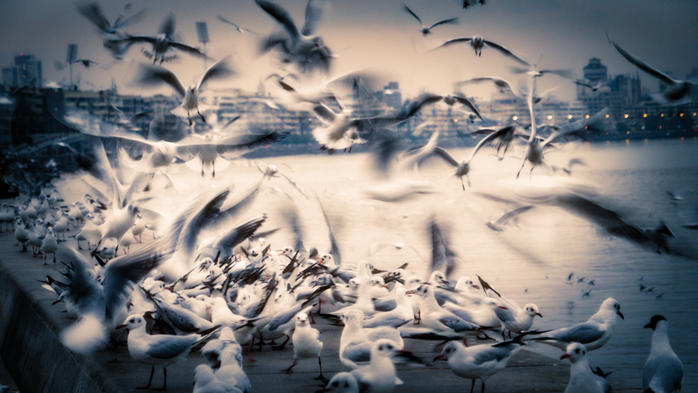 seagull-4.jpg