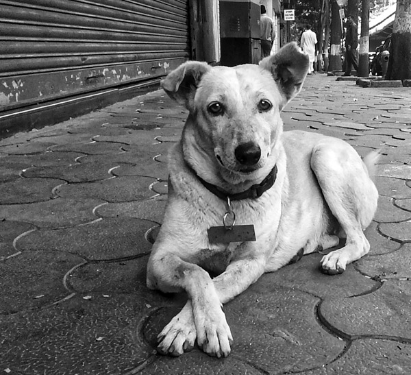 street_Mumbai-2.jpg