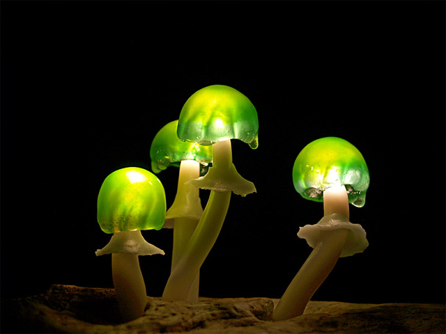 mushroom-8.jpg