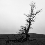 Tree No.1