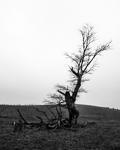 Tree No.3