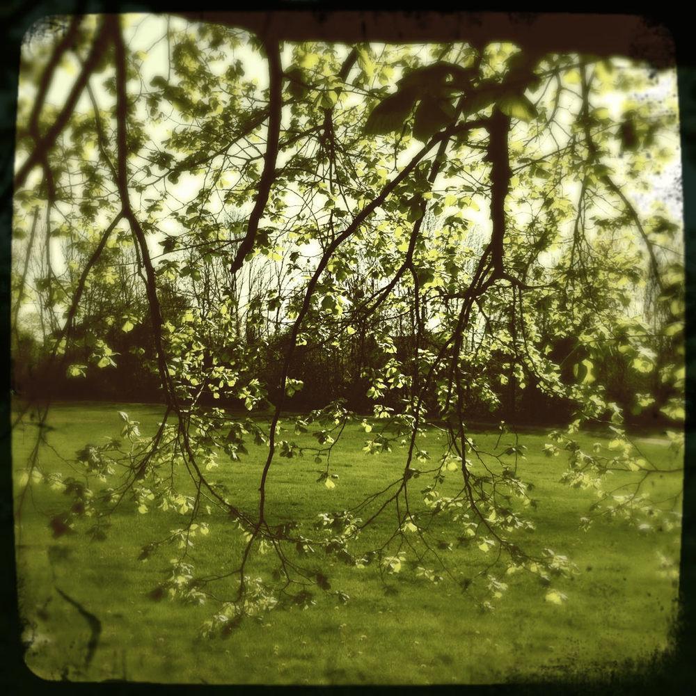 Under treet.jpg