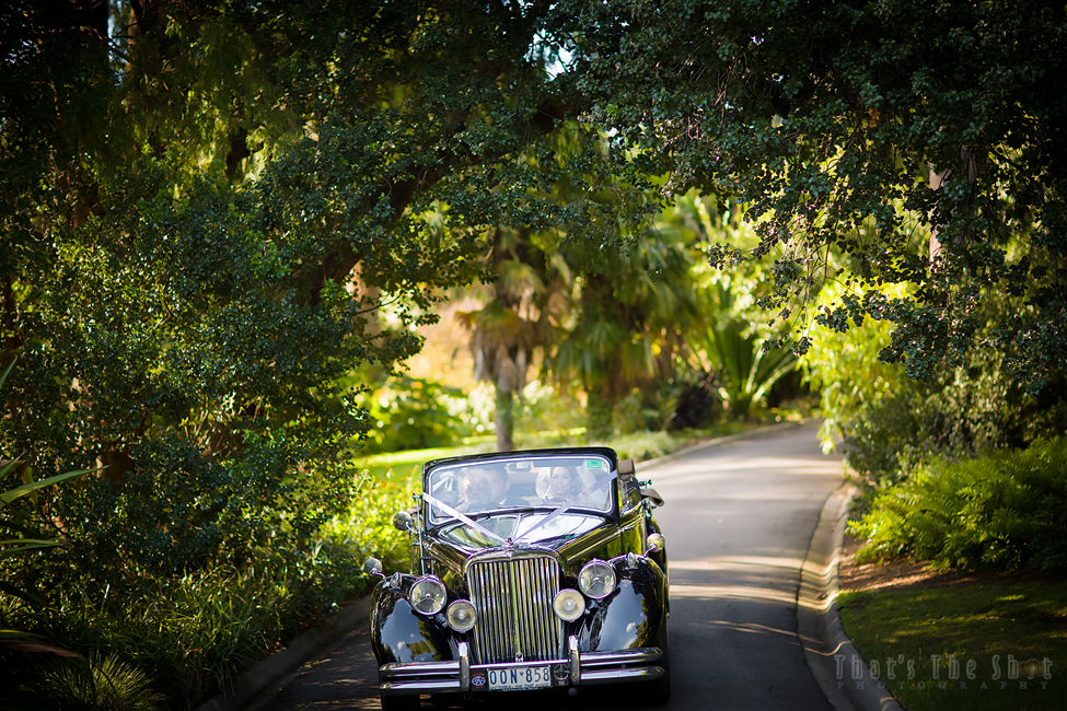Melbourne Botanical Gardens Wedding Photographer