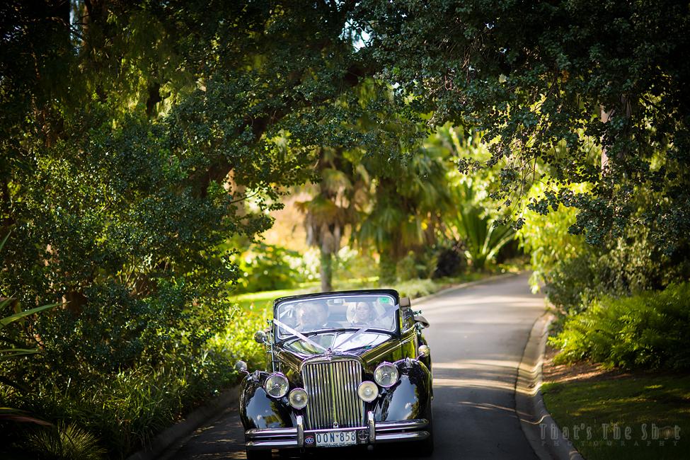 Melbourne Botanical Gardens Wedding Photographer