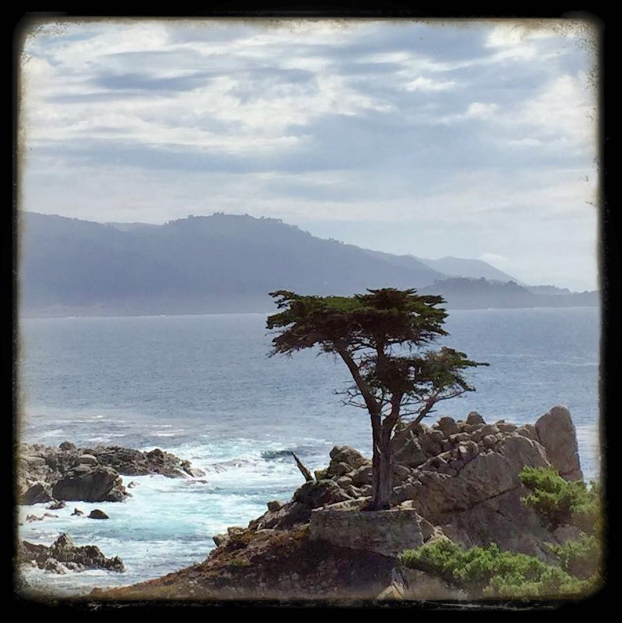 Lone Cypress - Pebble Beach