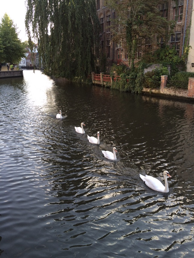 swans_on_canals.jpg
