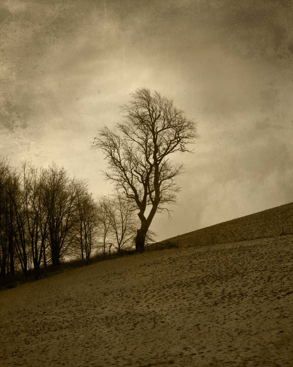 tree 5.jpg