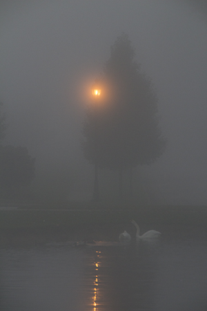 8 30 raw pond in the fog.jpg