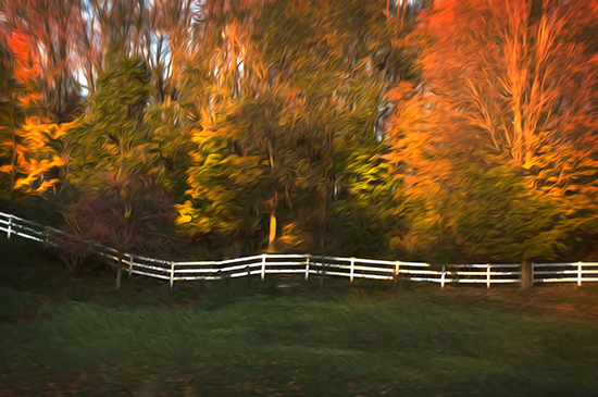 11 1 cooked fence in the autumn trees.jpg