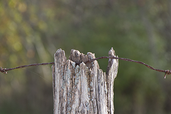 11 6 raw fence with barbed wire.jpg