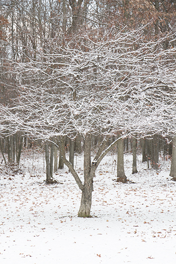 11 13 raw trees.jpg