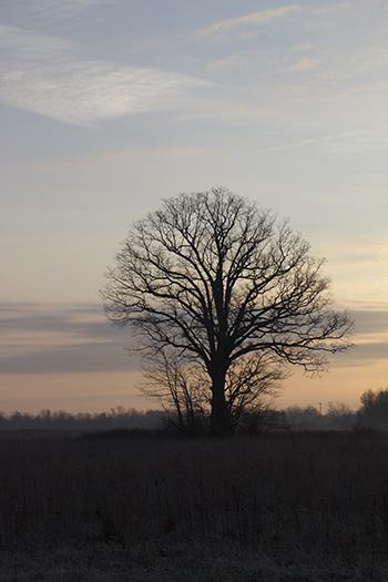 tree in the field raw  2 4.jpg