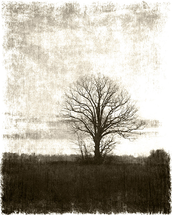 tree in the field cooked 2 4.jpg