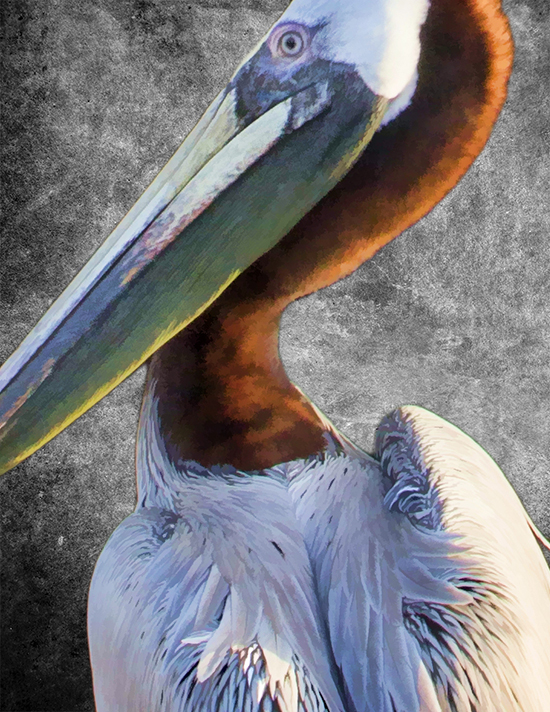 pelican in tampa florida cooked 2 10.jpg