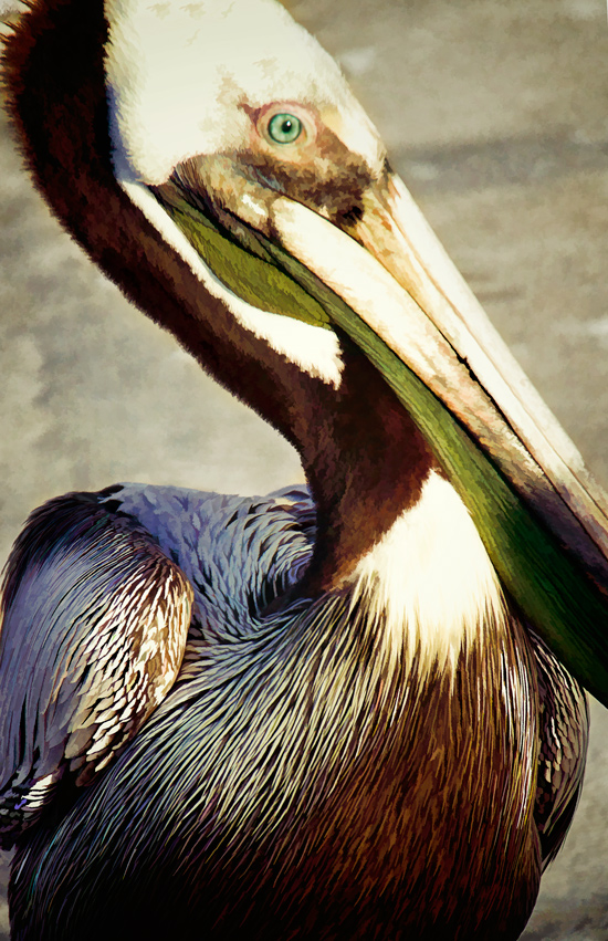 pelican-in-tampa-florida-cooked.jpg