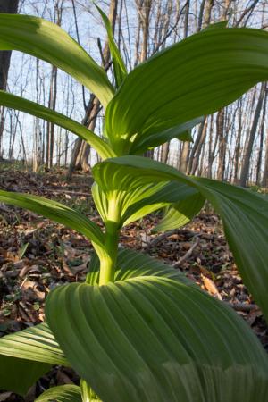 green-plant-raw-2.jpg