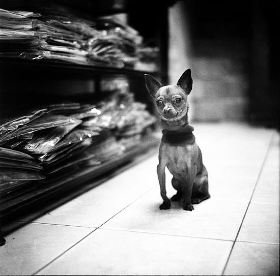 Dog, Hanoi, 2010