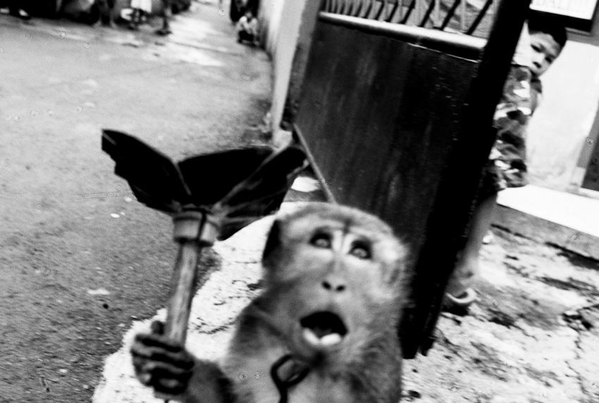 Monkey, Lenteng Agung, Jakarta Selatang, July 2014