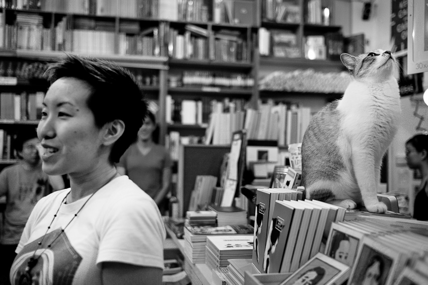 J Y Yang & a cat, From the Belly of the Cat