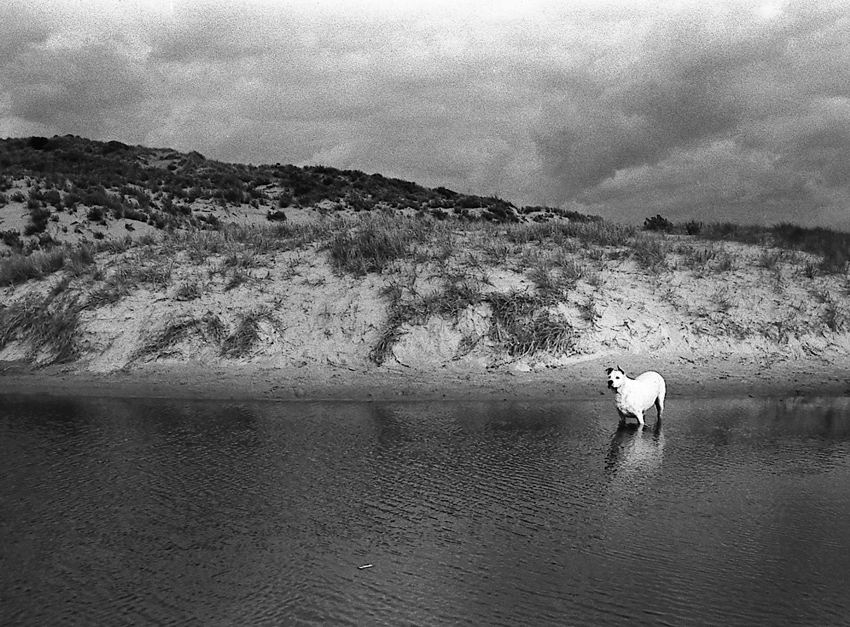 Dog, Aldinga Beach, South Australia, 2010
