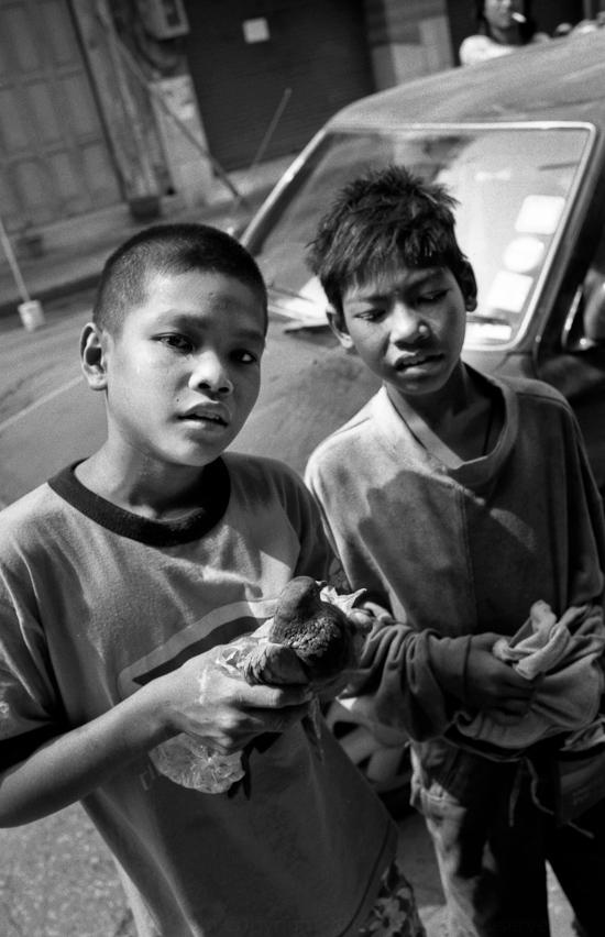 BangkokPigeon2000-1.jpg