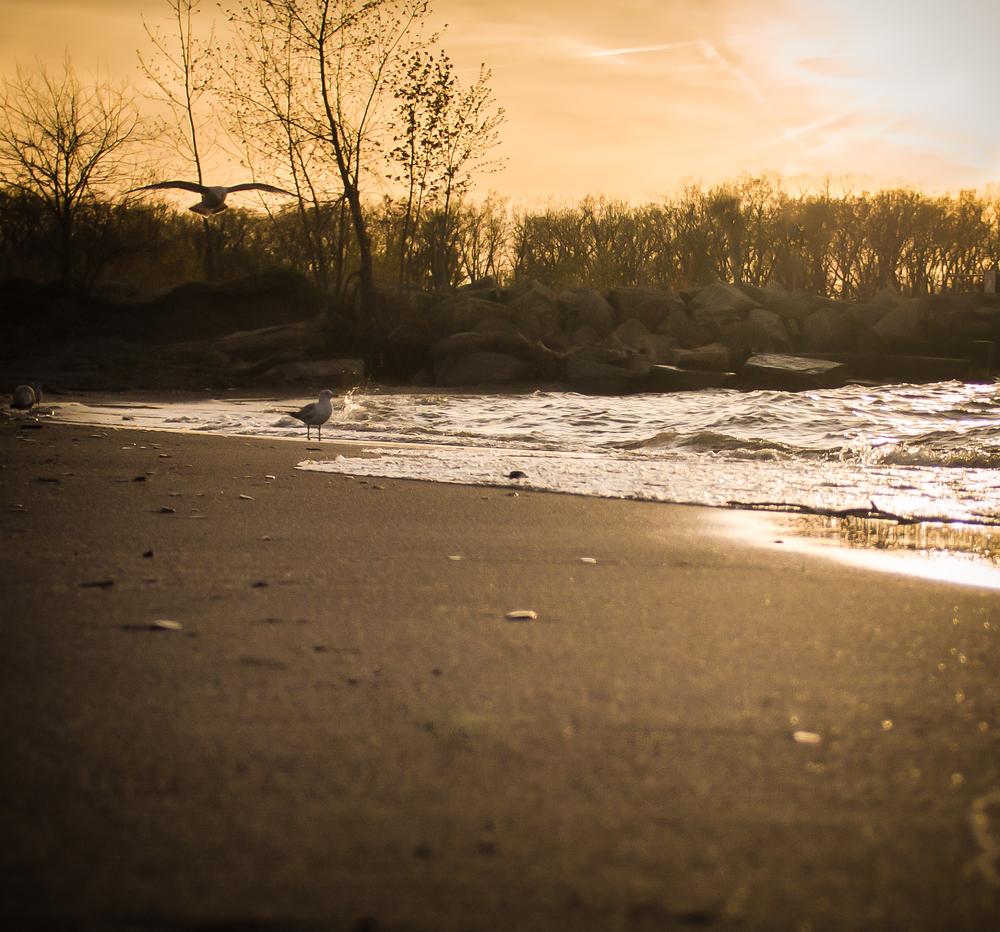 beach--2.jpg