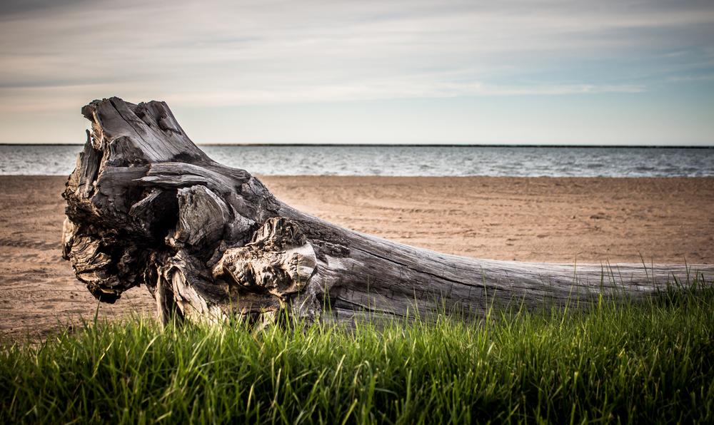 driftwood-1026.jpg