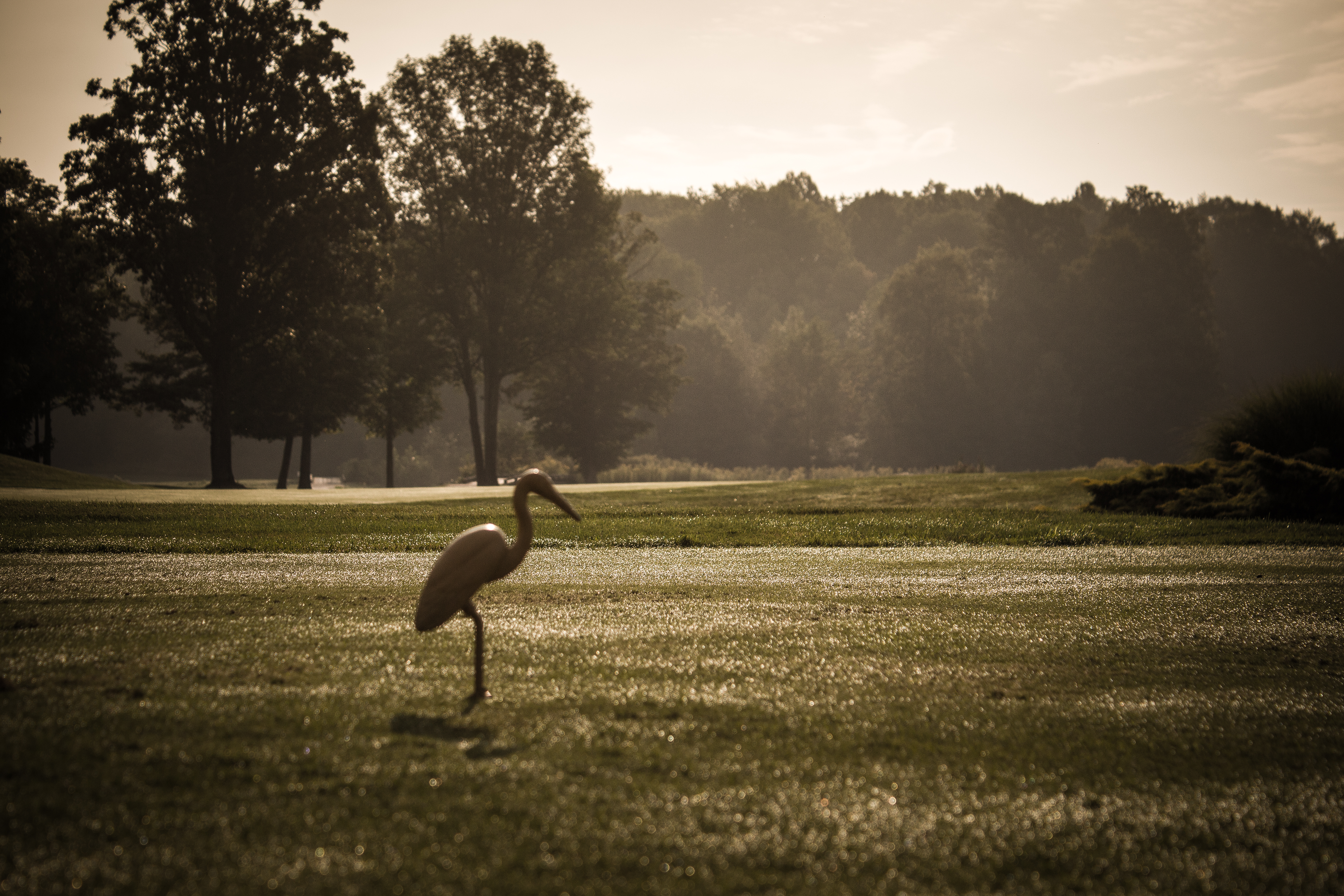 Early morning dew at Fowlers Mill Golf Course