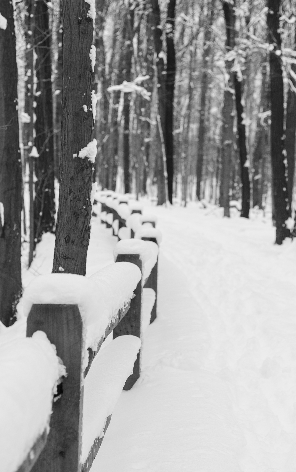 winter-5610.jpg