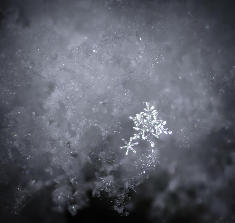 Snowflakes-5710.jpg