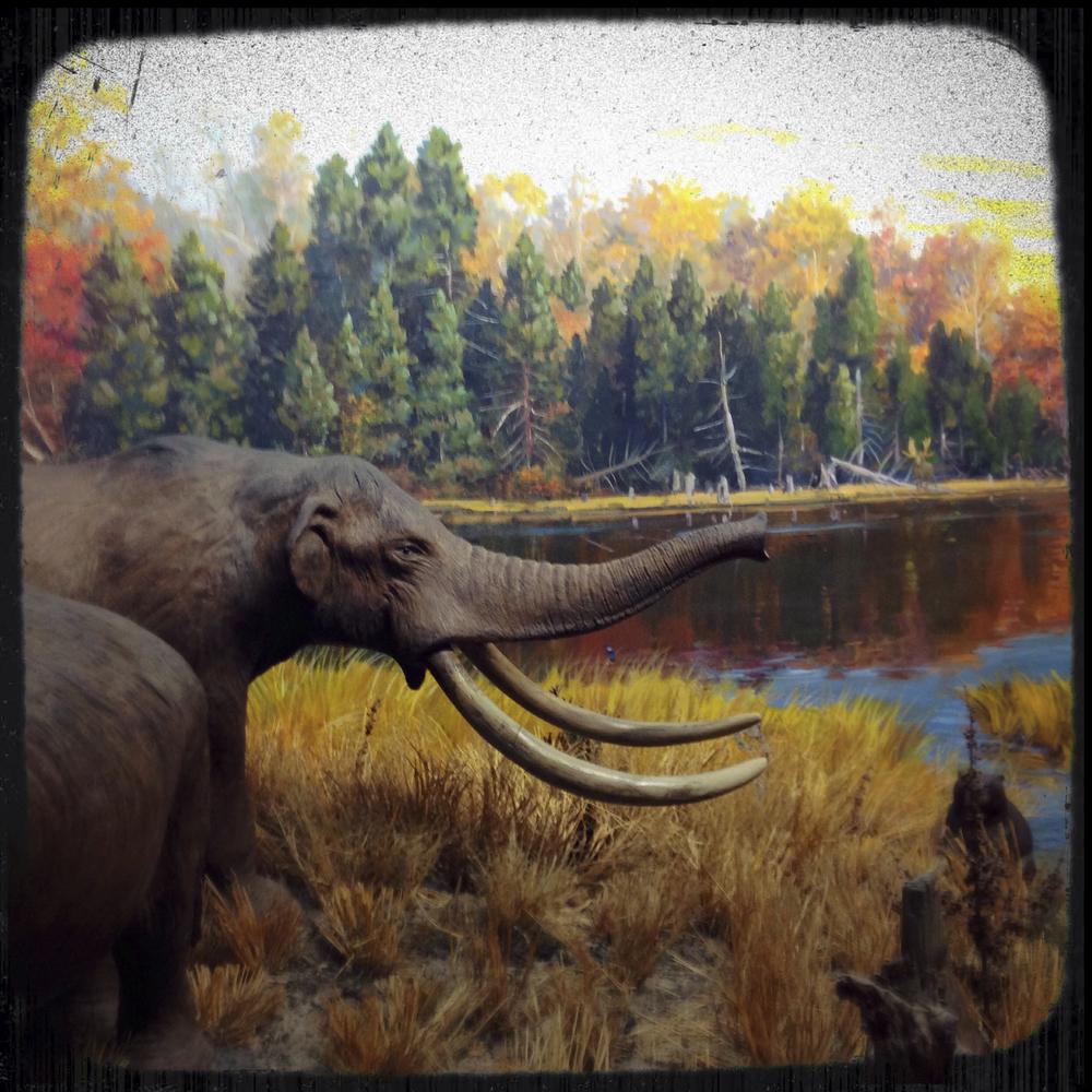 Natural History Museum-0172.jpg