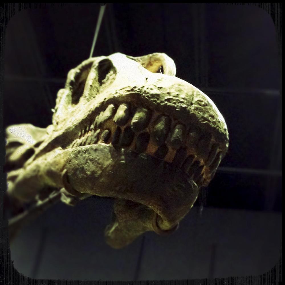 Natural History Museum-0173.jpg