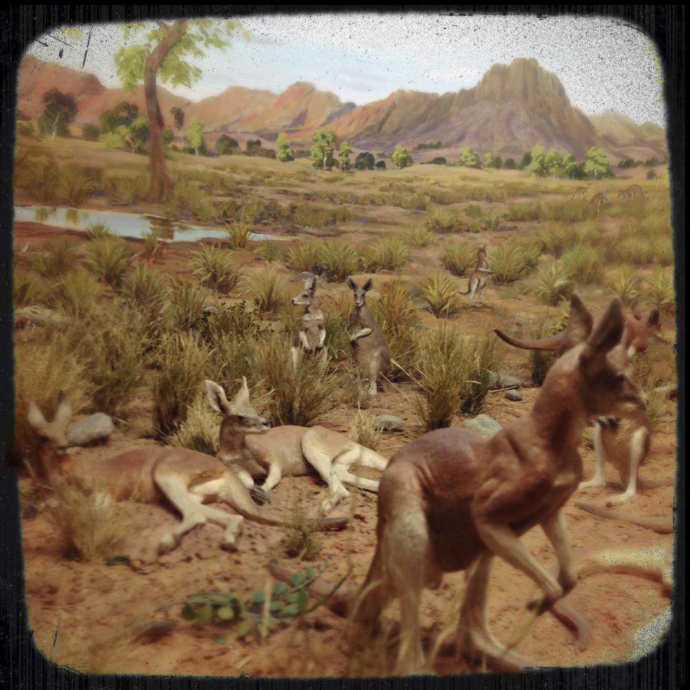 Natural History Museum-0176.jpg