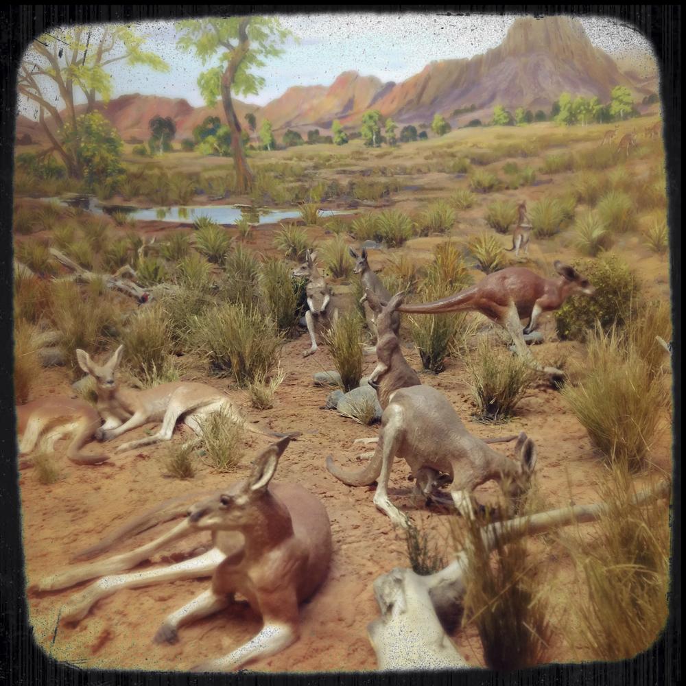 Natural History Museum-0177.jpg