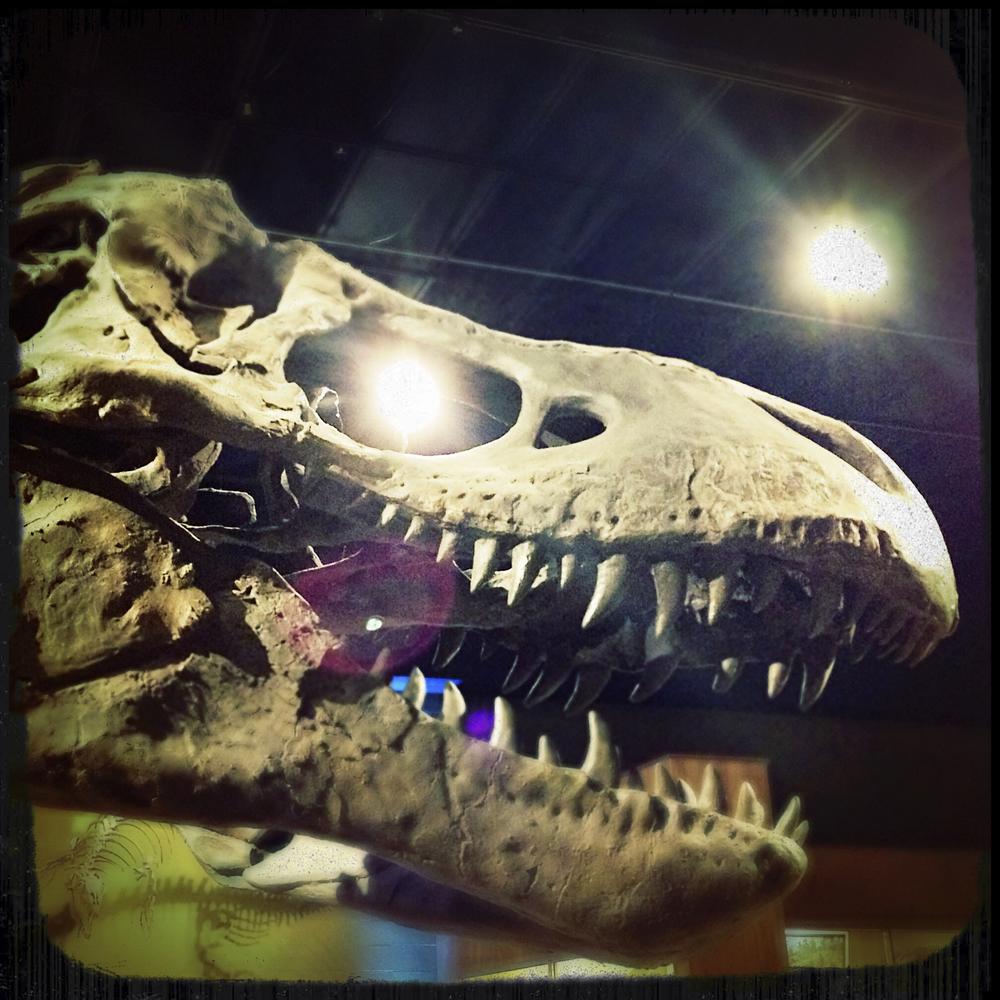 Natural History Museum-0184.jpg