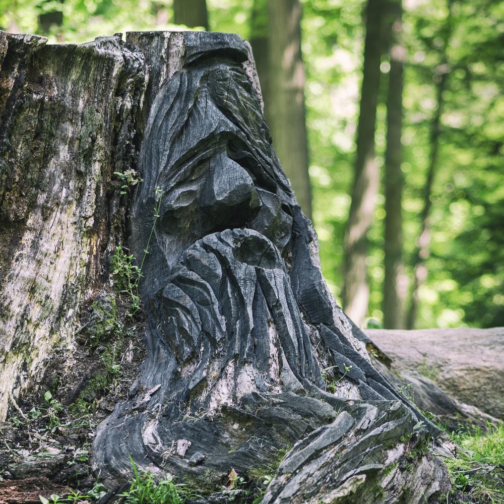 stump--2.jpg