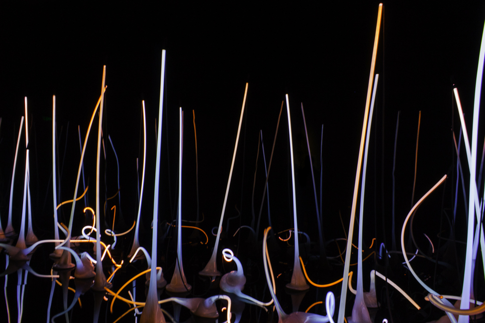 Chihuly Glass Museum-1.jpg