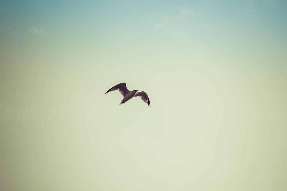 Gulls-1.jpg