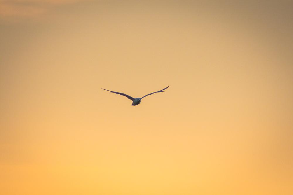 Gulls-4.jpg