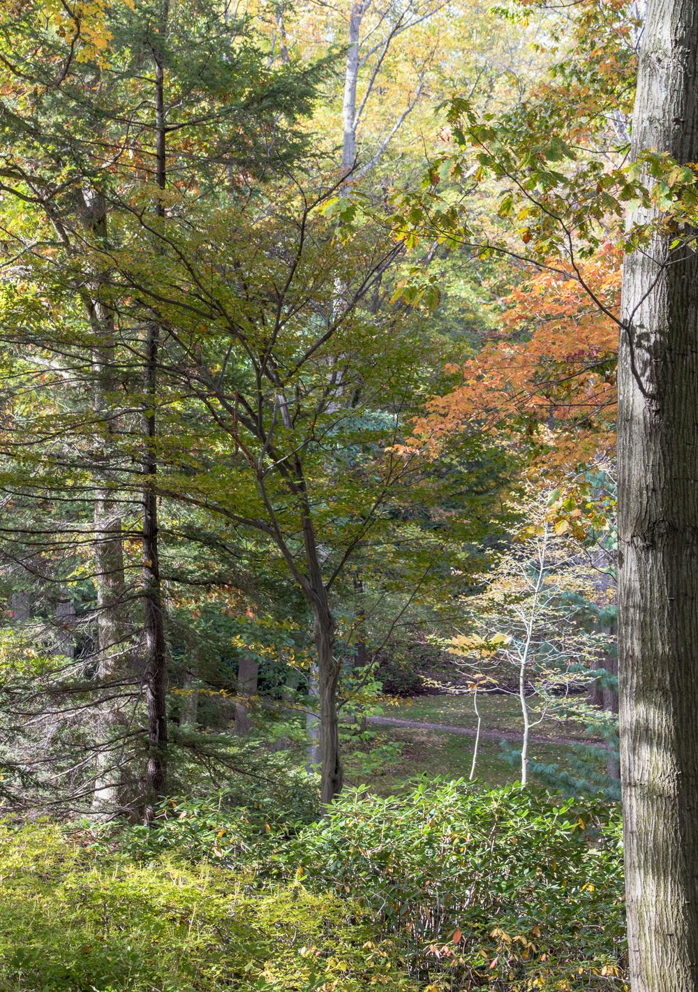 fall2015-10.jpg