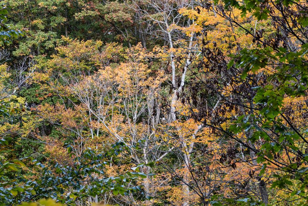 fall2015-13.jpg